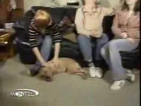Tek iki bacakli  ayakli bir köpek - Ilginc Iki bacakli yasayan köpek